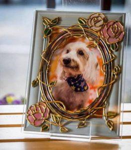 犬の写真のグラスアート